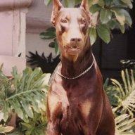theroguedog