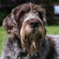 Gus Dog