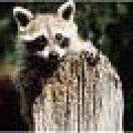 raccoon1414